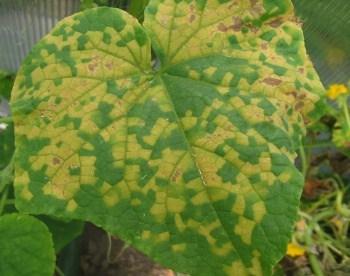 Le malattie delle piante da orto | Orto Da Coltivare